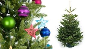 <b>Najljepša Božićna drvca,</b> <br>po super cijeni!