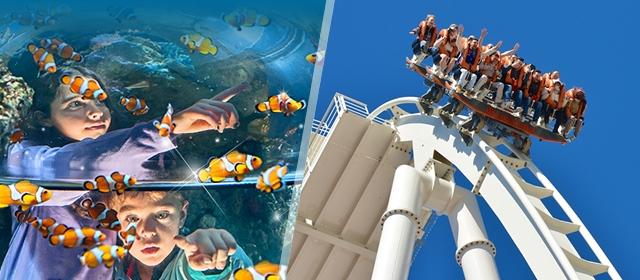 usluga upoznavanja s morskim psima Arizona stranica za upoznavanje